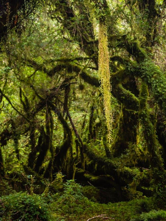 Dettaglio della foresta incantata in carretera australe, enca di Bosque immagini stock libere da diritti