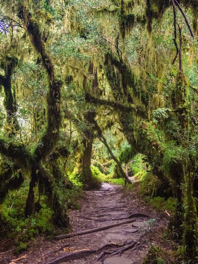 Dettaglio della foresta incantata in carretera australe, encantado Cile di Bosque fotografia stock