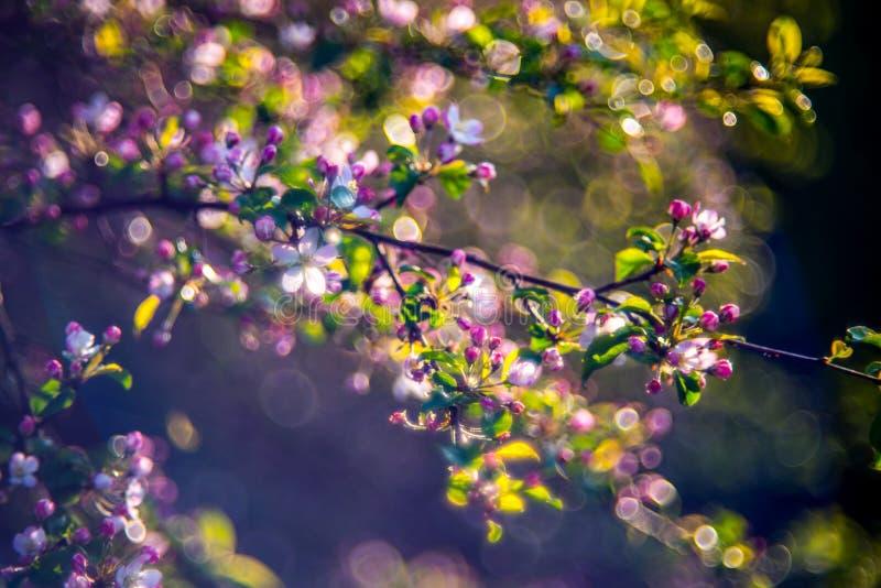 Dettaglio della natura in primavera immagini stock libere da diritti