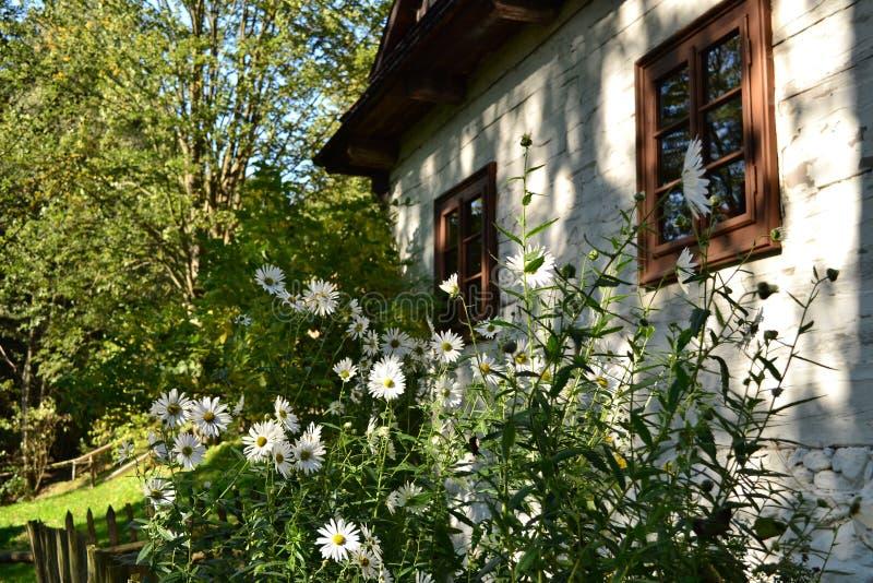 Dettaglio della parete di pietra bianca di vecchio cottage con i fiori bianchi in giardino fotografie stock libere da diritti