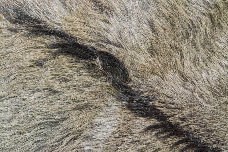 Dettaglio della pelle di capra immagini stock