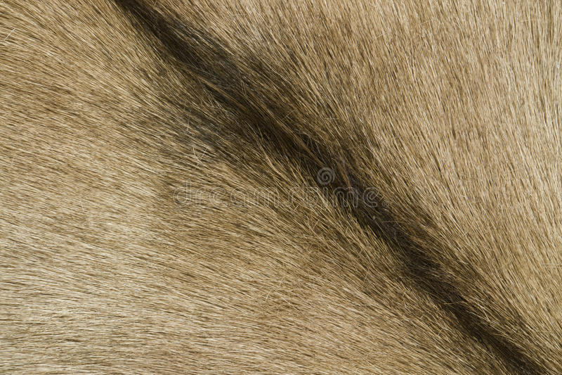 Dettaglio della pelle di capra di Brown fotografia stock
