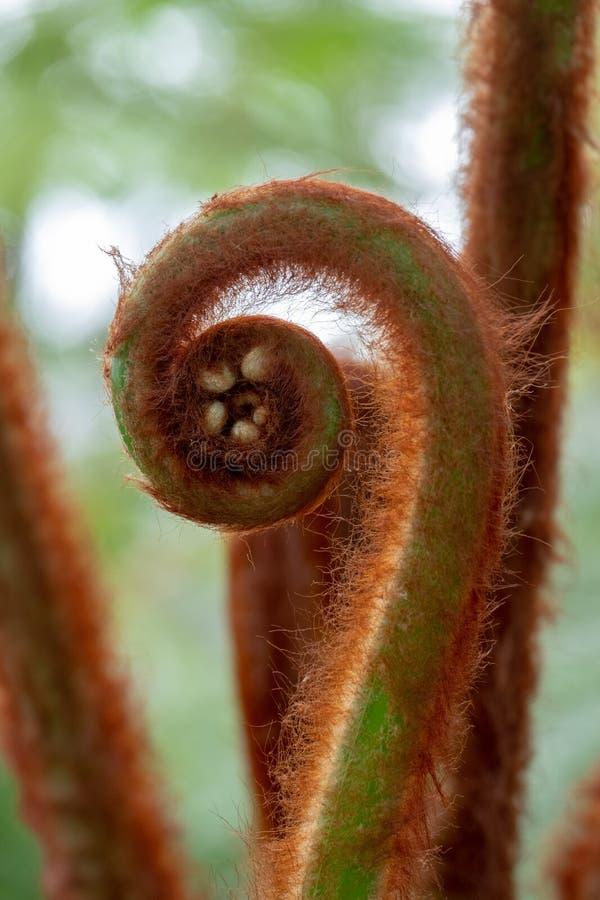 Dettaglio della pianta esotica nel giardino di inverno alle serre reali a Laeken, Bruxelles, Belgio immagine stock