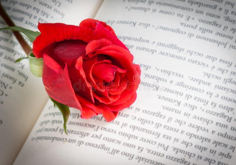 Dettaglio della rosa rossa sul libro aperto immagine stock