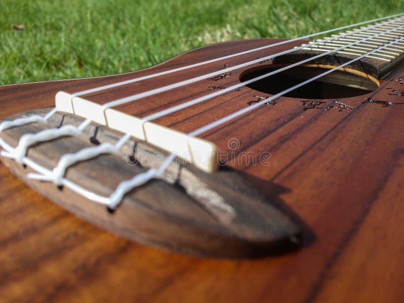 Dettaglio di belle ukulele nel giardino immagine stock