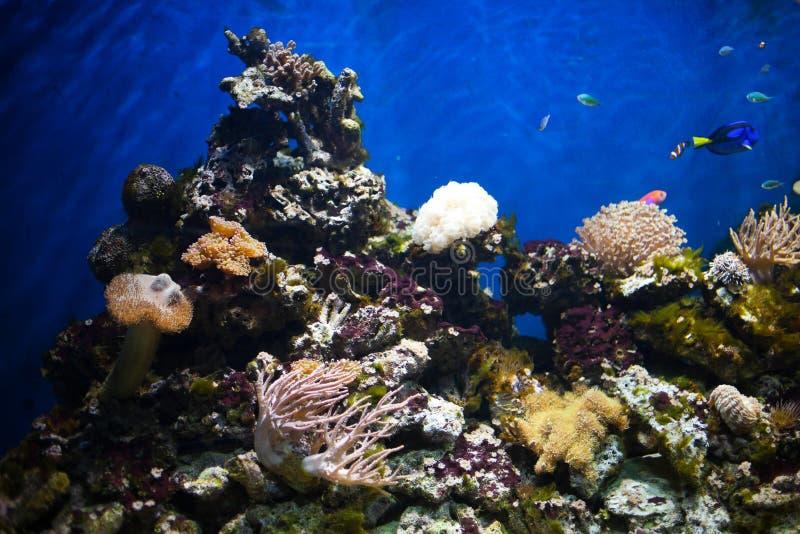 Dettaglio di corallo in acquario fotografia stock