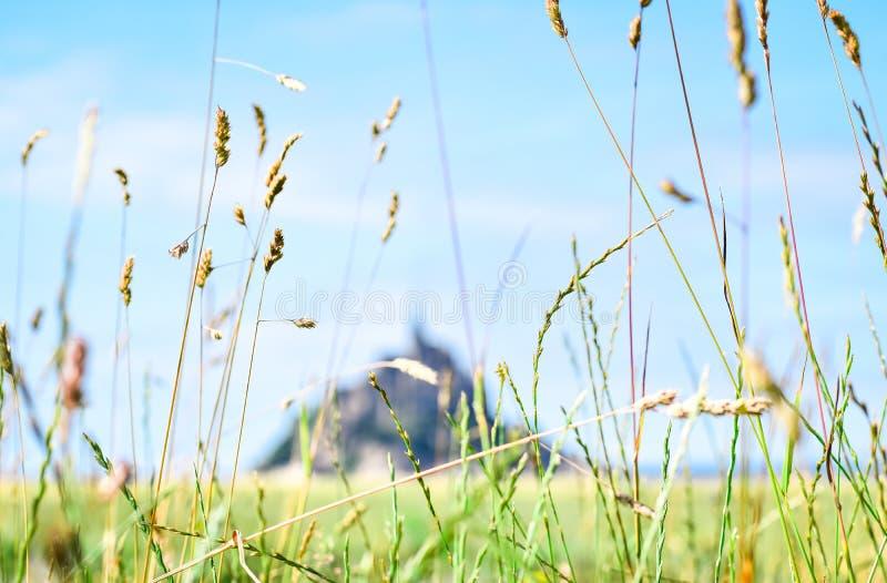 Dettaglio di erba nella priorità alta, con la siluetta defocused di Mont Saint Michel nei precedenti fotografie stock libere da diritti