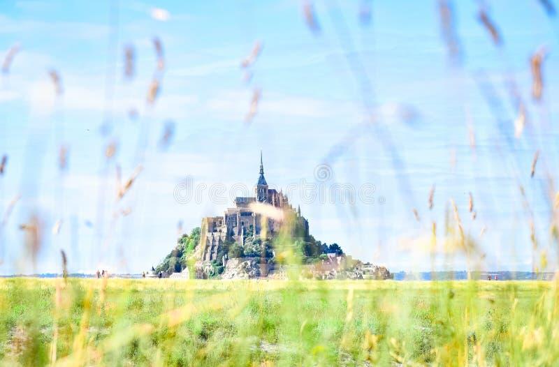 Dettaglio di erba nella priorità alta, con la siluetta di Mont Saint Michel, la Francia, nei precedenti immagini stock libere da diritti