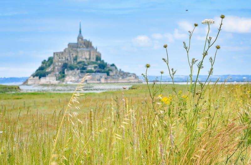 Dettaglio di erba nella priorità alta ed in Mont Saint Michel, Francia, nei precedenti fotografia stock libera da diritti