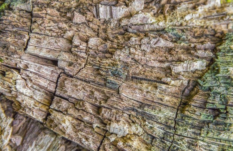 Dettaglio di legno di decomposizione immagini stock