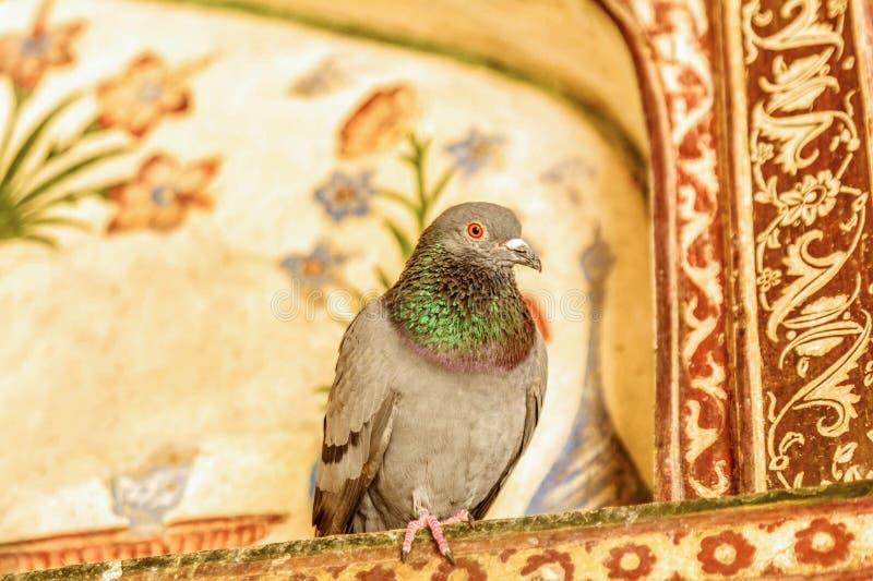 Dettaglio di un bambino Taj Mahal con il piccione su  immagine stock