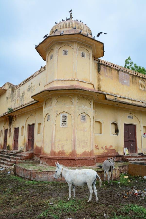 Dettaglio di vecchia costruzione con gli asini a Jaipur, India fotografia stock
