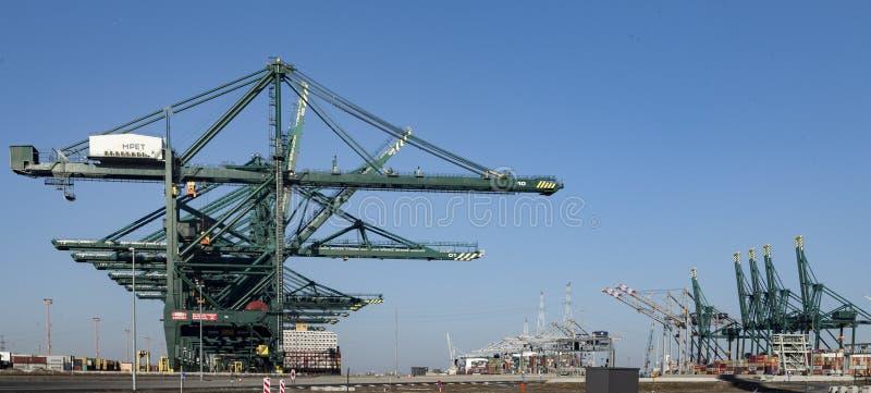 Deurganckdock,安特卫普比利时,最大的容器的口岸 库存图片