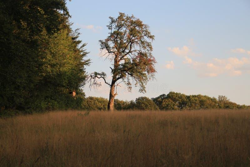 Deutschland-Natur stockbilder