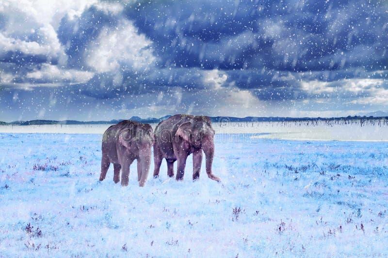 Deux éléphants dans chutes de neige images stock