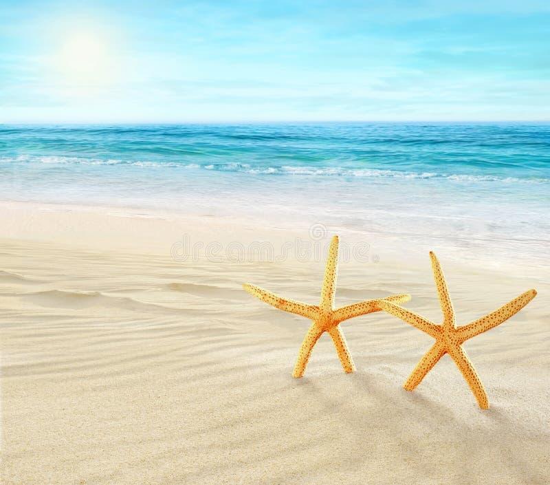 Deux étoiles de mer sur la plage image stock