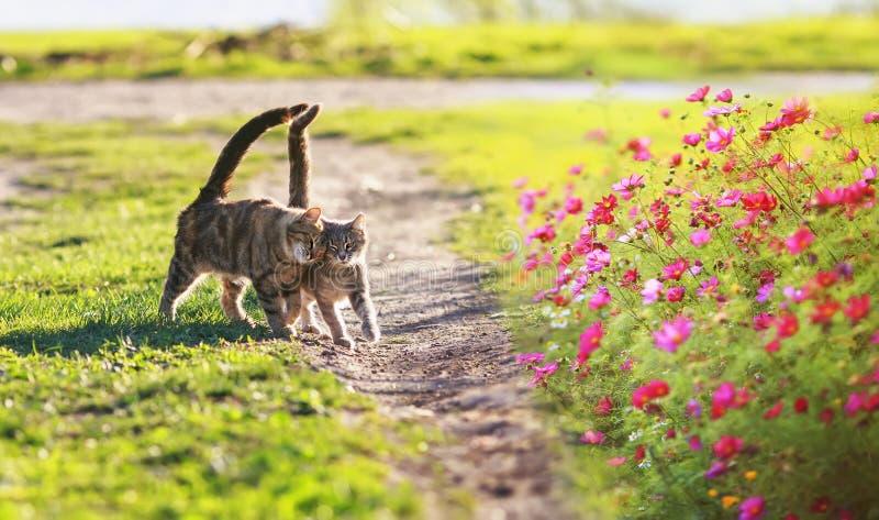 Deux adorables oiseaux rayés marchent sur l'herbe verte dans le jardin ensoleillé de printemps au milieu des fleurs images stock