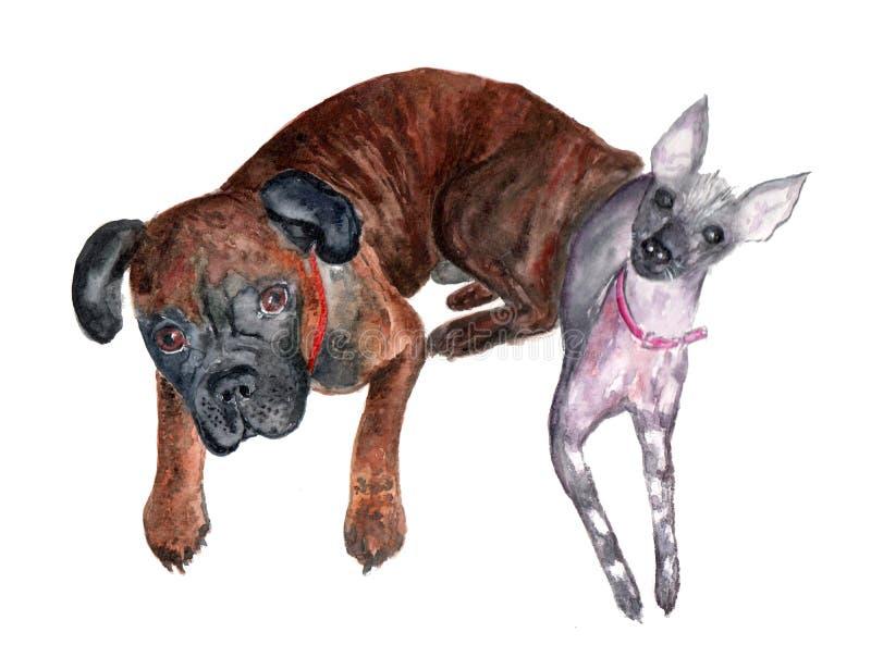 Deux amis de chiens sont peints avec des aquarelles sur le papier photos stock