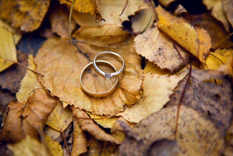 Deux anneaux d'or les épousant photo stock
