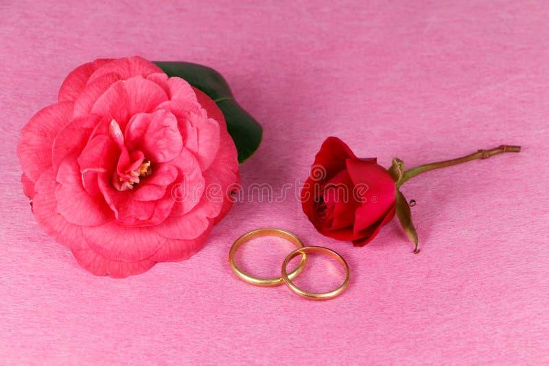 Deux anneaux de mariage, rose rouge et fleur rose de camélia photographie stock libre de droits