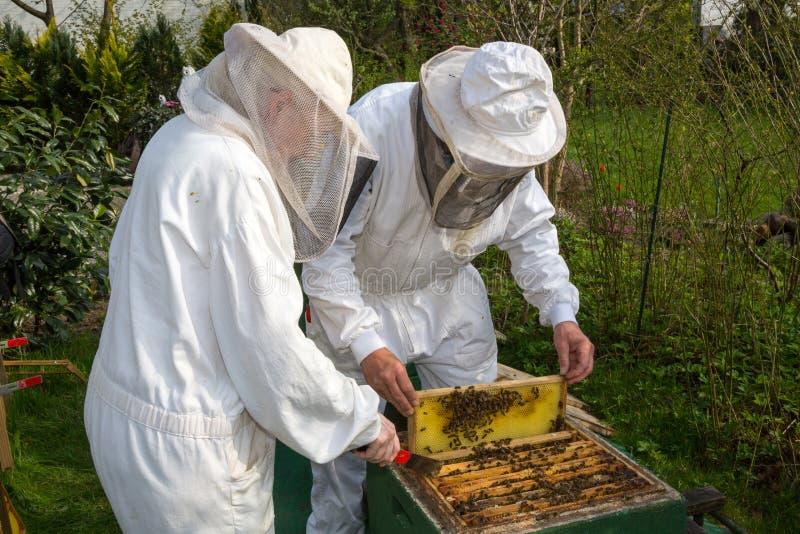 Deux apiculteurs maintenant la ruche d'abeille photo stock