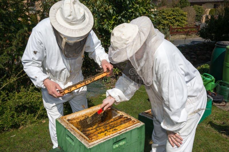 Deux apiculteurs maintenant la ruche d'abeille photos stock