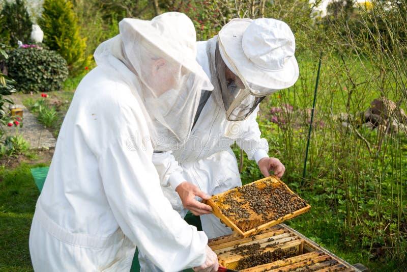Deux apiculteurs maintenant la ruche d'abeille image libre de droits