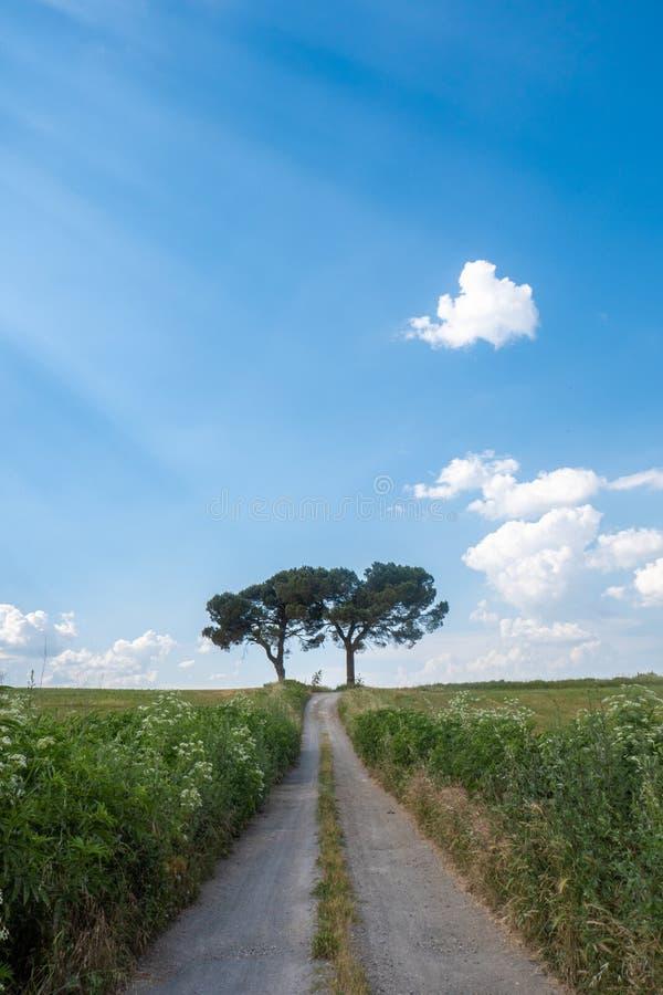 Deux arbres à l'extrémité de la route dans la campagne italienne en Toscane, avec le ciel bleu et les nuages blancs photo stock
