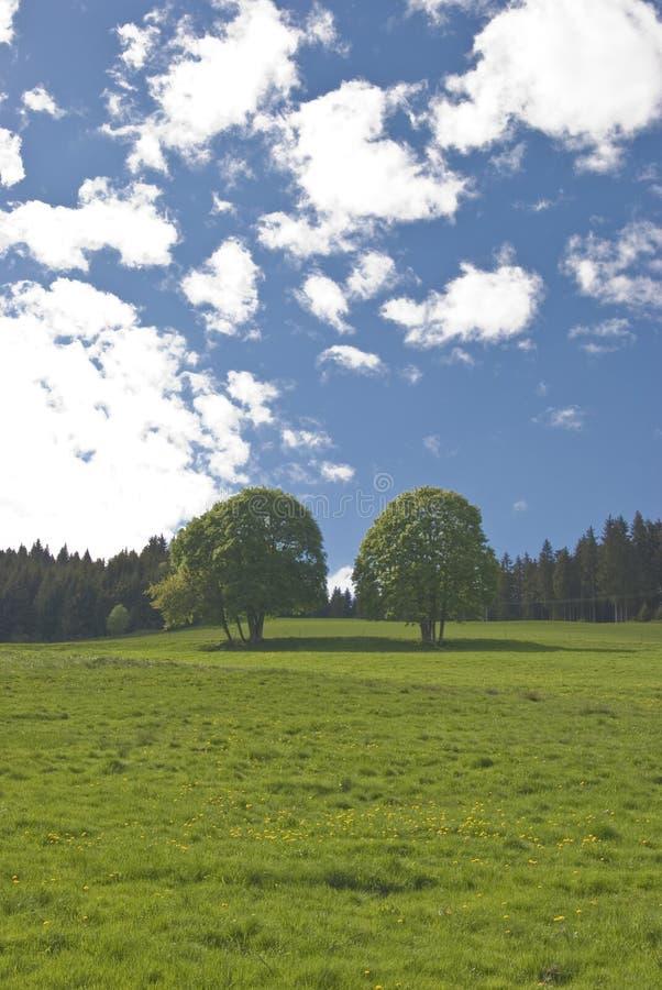 Deux arbres photo libre de droits