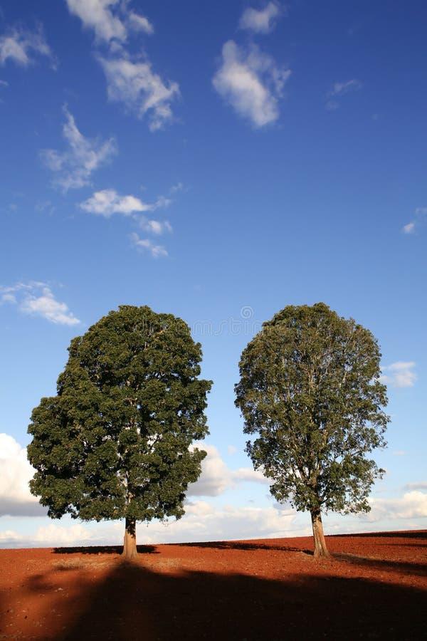 Deux arbres images libres de droits