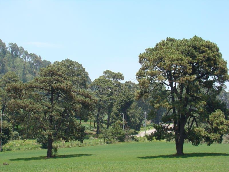 Deux arbres dans le pré images libres de droits