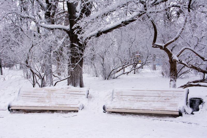 Deux bancs couverts de neige images libres de droits