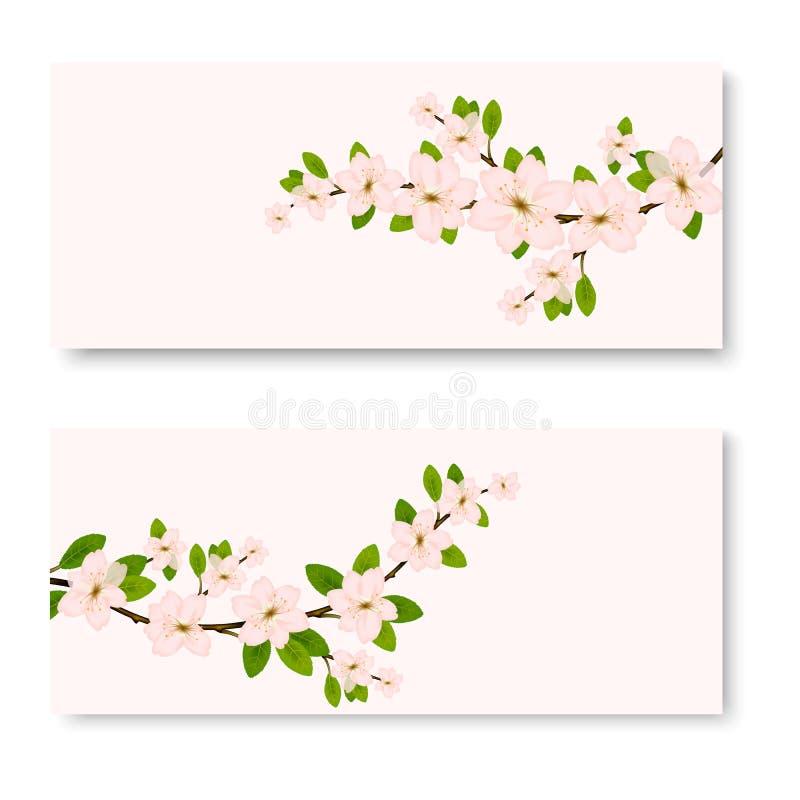 Deux bannières avec les fleurs ornementales roses de Sakura illustration de vecteur