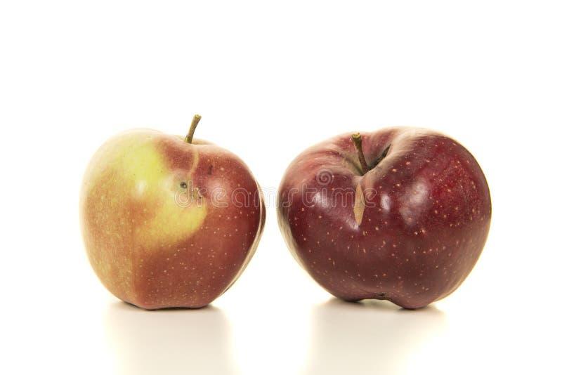 Deux biologiques, pommes organiques et rouges avec quelques petits défauts sur a image stock