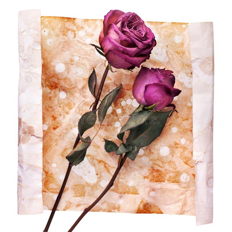 Deux Bourgogne se sont levés des fleurs sur la fin de papier âgée chiffonnée peinte de fond d'isolement sur blanc, invitation de  image stock