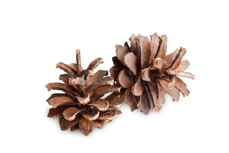 Deux cônes de pin brun sur un fond blanc d'isolement photographie stock