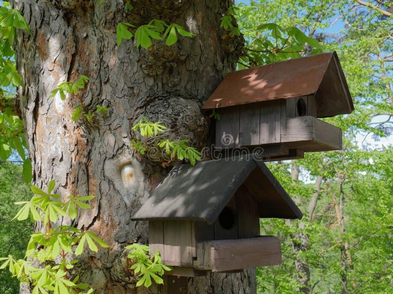 Deux cabanes dans un arbre d'écureuil images stock