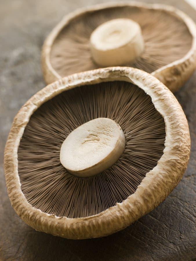 Deux champignons de couche de Portobello images stock