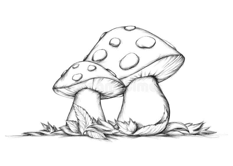 Deux champignons volants en automne illustration stock