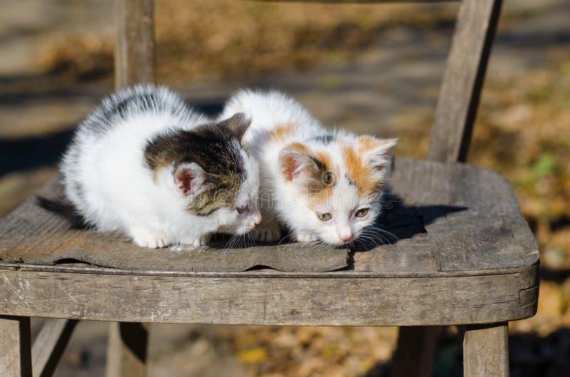 Deux chatons dans une chaise photos stock