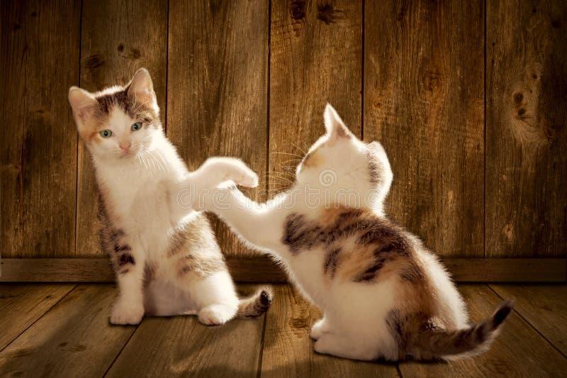 Deux chatons jouent photo stock