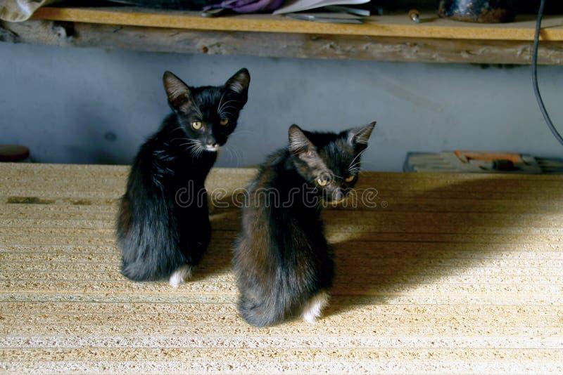 Deux chatons noirs sont revenus, se reposant sur le carton gris photo libre de droits