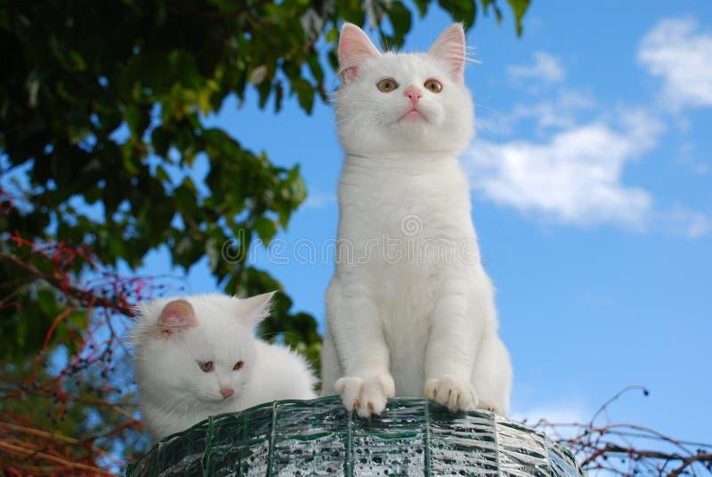 Deux chatons se reposant sur le rouleau de clôture de jardin photo stock