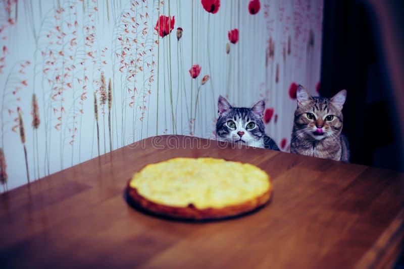Deux chatons se reposent devant la table photographie stock libre de droits