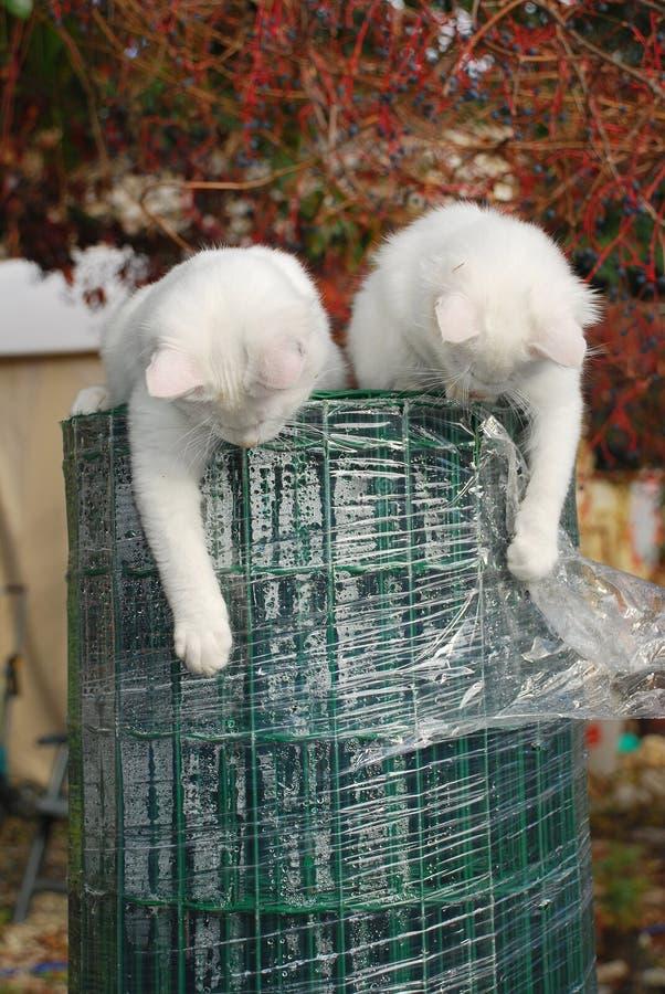 Deux chatons sur le jardin clôturant le roulis photographie stock libre de droits