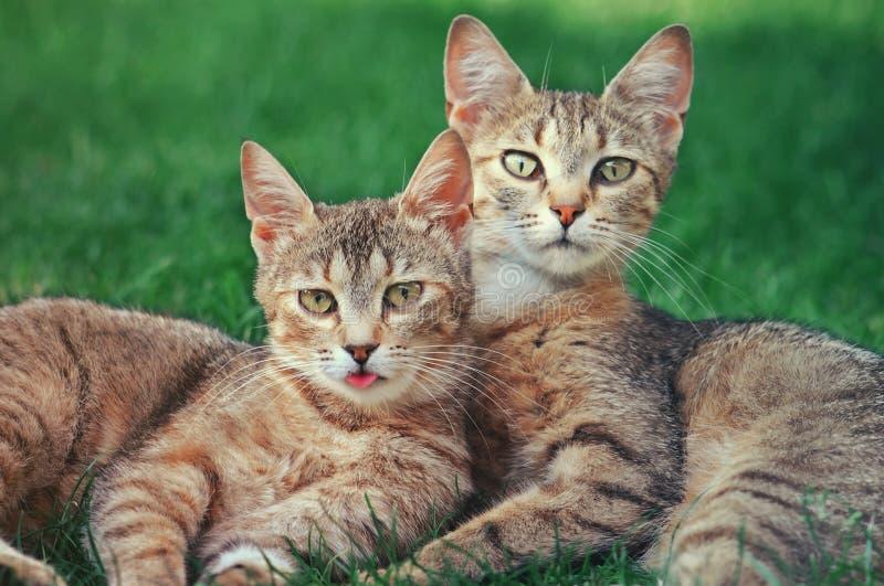 Deux chats image libre de droits