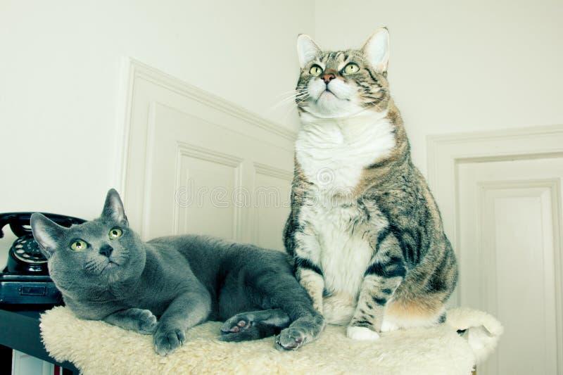 Deux chats avec le téléphone antique photographie stock libre de droits