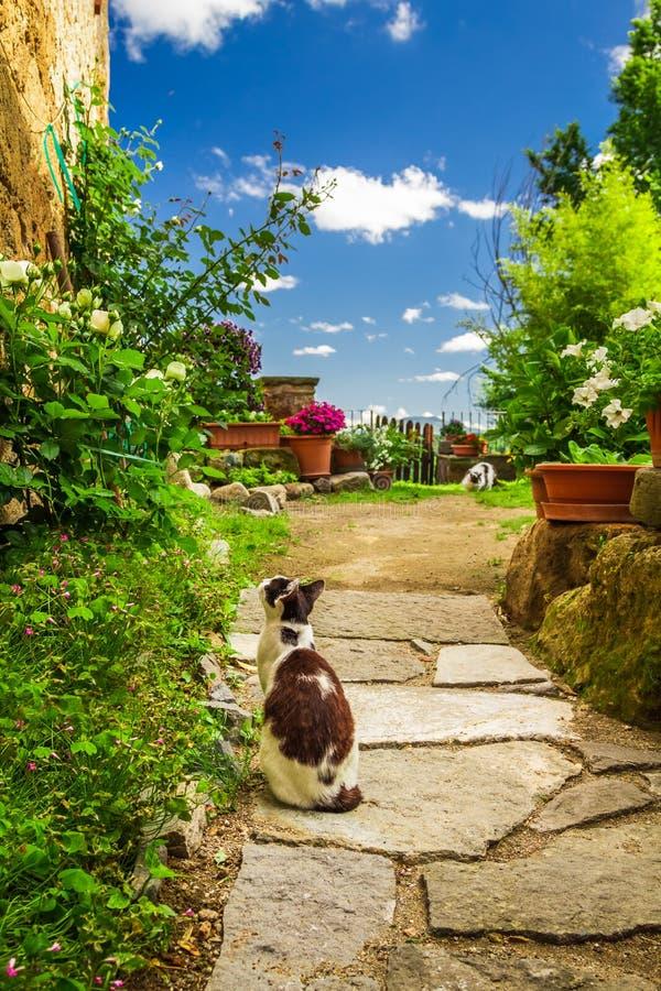 Deux chats dans le jardin antique images libres de droits