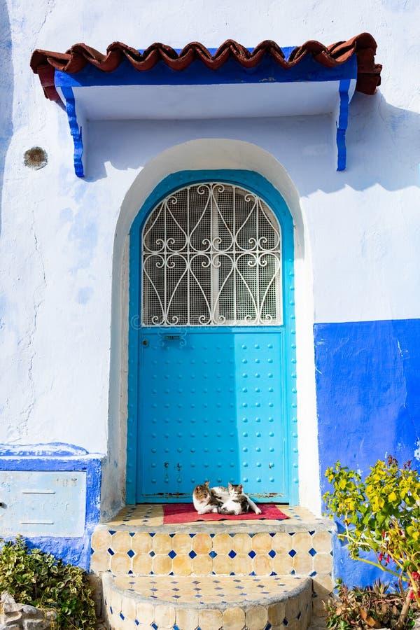 Deux chats devant une porte bleue dans Chefchaouen Maroc images stock