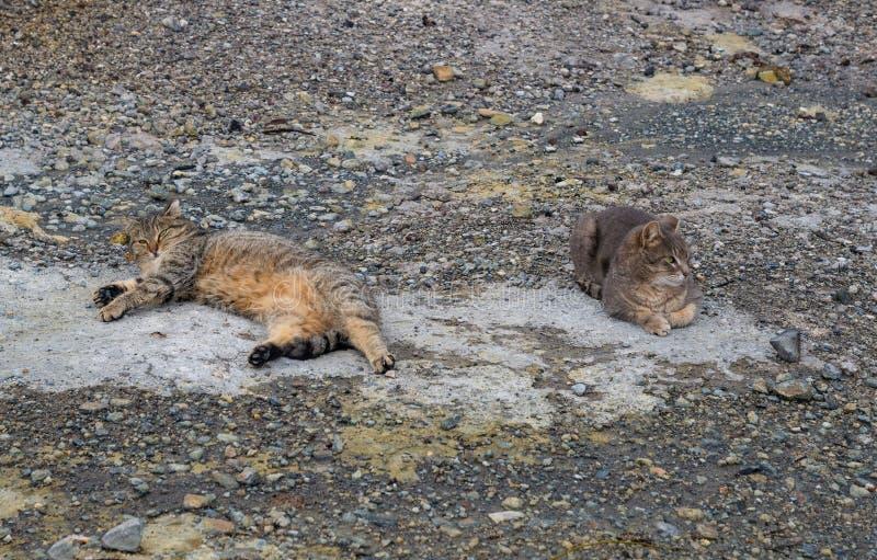 Deux chats gris s'étendant au sol photos stock